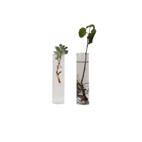 vase, reagensglas ø15x100, glas, blomster